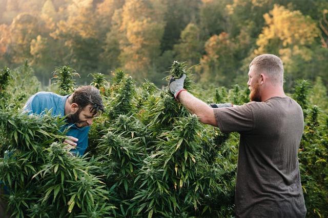 24 Secrets de Pros pour Cultiver du Cannabis