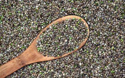 Qu'est que les Seeds de cannabis, CBD et Chanvre ?