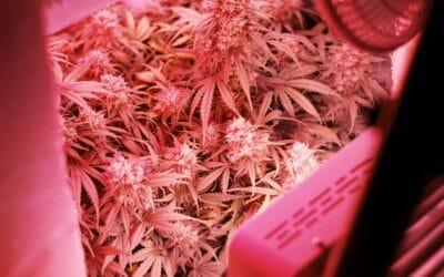 Il Faut Légaliser le Cannabis – Marijuana (Top 10 Raisons)