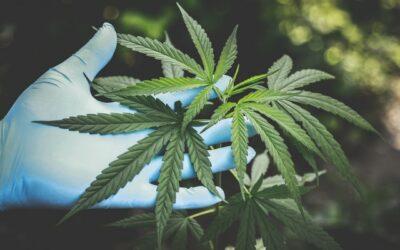 Histoire du Cannabis Médical (et thérapeutique)